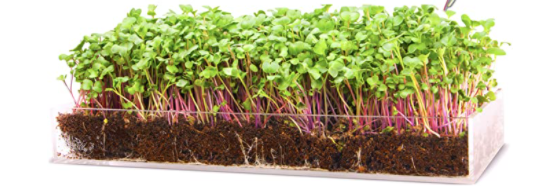homesteader gift ideas microgreens growing set